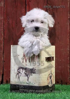 Xavier, ANIMALS, dogs, photos(SPCHdogs701,#A#) Hunde, perros