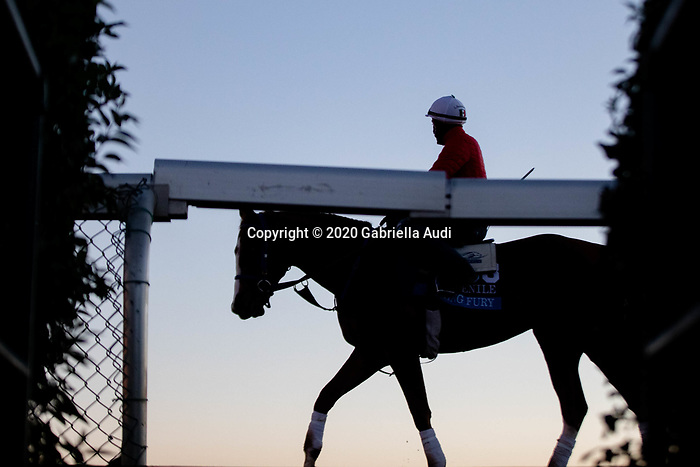 November 4, 2020: King Fury, trained by trainer Kenneth G. McPeek, exercises in preparation for the Breeders' Cup Juvenile at Keeneland Racetrack in Lexington, Kentucky on November 4, 2020. Gabriella Audi/Eclipse Sportswire/Breeder's Cup/CSM