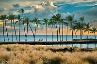 Coastline with palm trees, and fish ponds. Anaehoomalu Bay (A-Bay). Hawaii, The Big Island. The Island of Hawaii