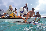Jean de Marignac & Aya Tagging Lemon Shark With Sam Gruber, Rick, Jon & Joao In Boat, Peter Zuccarini Filming In Water