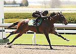 07 April 2011.  Hip #147 Street Sense - Good Student (Arg) colt, consigned by Wavertree Stables works 1/8 in 09.4.