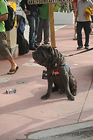 Hund mit NFL Credential auf der NFL Fanmeile am Ocean Drive in Miami Beach<br /> NFL Fan Jam, Miami Beach *** Local Caption *** Foto ist honorarpflichtig! zzgl. gesetzl. MwSt. Auf Anfrage in hoeherer Qualitaet/Aufloesung. Belegexemplar an: Marc Schueler, Alte Weinstrasse 1, 61352 Bad Homburg, Tel. +49 (0) 151 11 65 49 88, www.gameday-mediaservices.de. Email: marc.schueler@gameday-mediaservices.de, Bankverbindung: Volksbank Bergstrasse, Kto.: 52137306, BLZ: 50890000