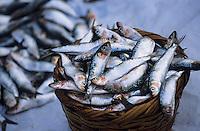 Afrique/Afrique du Nord/Maghreb/Maroc/Essaouira : Le port de pêche - La part du pêcheur et vente de sardines sur le bateau