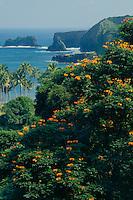 Tulip trees and Moku Mana Island<br /> Hana Highway I<br /> sland of Maui<br /> Hawaii