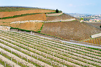 A view east over the terraced vineyards Les Rocules and Les Murets The Hermitage vineyards on the hill behind the city Tain-l'Hermitage, on the steep sloping hill, stone terraced. Sometimes spelled Ermitage. Tain l'Hermitage, Drome, Drôme, France, Europe
