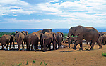 South Africa, Garden Route, Addo Elephant National Park: elephants at the waterhole