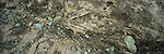 Remains of a Sockeye Salmon on the Alaskan Peninsula.