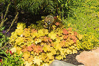 Heuchera with garden globe ornament, gazing ball