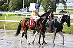 NEW ORLEANS, LA - JANUARY 21:<br />  Seeking the Soul #1 ridden by Florent Geroux in the post parade before the Louisiana Stakes at the Fairgrounds Race Course on January 21,2017  in New Orleans, Louisiana. (Photo by Steve Dalmado/Eclipse Sportswire/Getty Images)