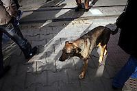 BULGARIA, Sofia, 2012/04/5..A stray dog ??walking in a crowd of passersby in the center of Sofia, Bulgaria..BULGARIE, Sofia, 2012/04/5..Un chien errant marche au milieu d'une foule de passants dans le centre de Sofia, Bulgarie..© Pierre Marsaut
