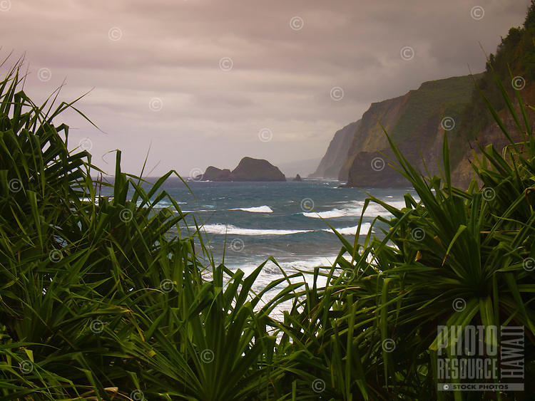 A view of the Kohala Mountain cliffs from the hiking path into Pololu Valley, North Kohala, Big Island.