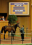 September 14, 2015: Hip 95 Bodemeister - Auspiciously colt consigned by St. George Sales.  Candice Chavez/ESW/CSM