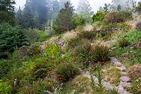 Path through coastel section of California native plant botanic garden, East Bay Regional Parks Botanic Garden