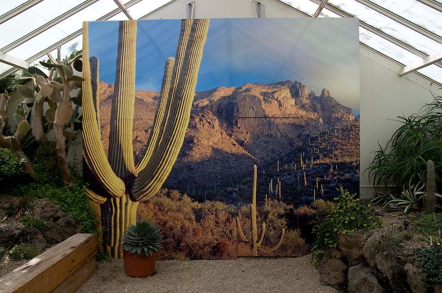 Cactus mural 2010