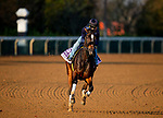 November 1, 2020: Dayoutoftheoffice, trained by trainer Timothy E. Hamm, exercises in preparation for the Breeders' Cup Juvenile Fillies at  Keeneland Racetrack in Lexington, Kentucky on November 1, 2020. Alex Evers/Eclipse Sportswire/Breeders Cup /CSM