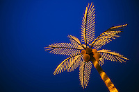Golden lighted palm tree against a blue sky at the beach