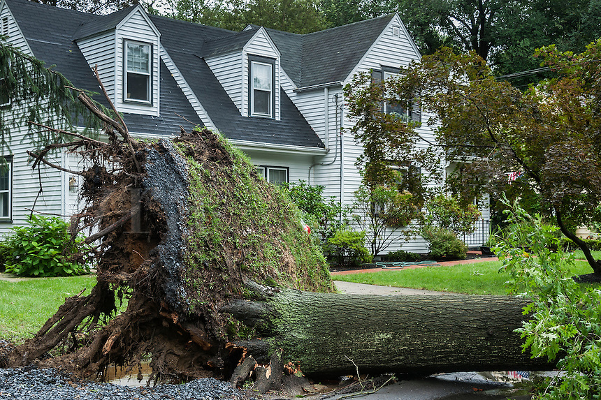 Hurricane tree damage, New Jersey, USA