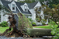 Hurricane tree damage, New Jersey, USA