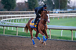November 5, 2020: Improbable, trained by trainer Bob Baffert, exercises in preparation for the Breeders' Cup Classic at Keeneland Racetrack in Lexington, Kentucky on November 5, 2020. Scott Serio/Eclipse Sportswire/Breeders Cup/CSM