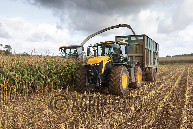 14.10.2020 Contractors chopping maize for use in an Anaerobic Digestion plant<br /> ©Tim Scrivener Photographer 07850 303986<br />      ....Covering Agriculture In The