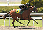 07 April 2011.  Hip #119 Hat Trick - Chiming Dixie colt, consigned by Niall Brennan.