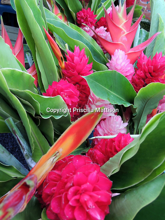 Closeup of tropical flowers in shades of pink.
