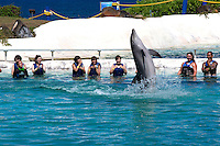 Patrons watch dolphins perform at Sea Life Park in Waimanalo, HI. Just beyond their tanks is Waimanale Bay and the Pacific Ocean. (photo © Karen Ducey)