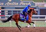 October 29, 2019 : Breeders' Cup Turf entrant Old Persian, trained by Charlie Appleby, exercises in preparation for the Breeders' Cup World Championships at Santa Anita Park in Arcadia, California on October 29, 2019. Scott Serio/Eclipse Sportswire/Breeders' Cup/CSM