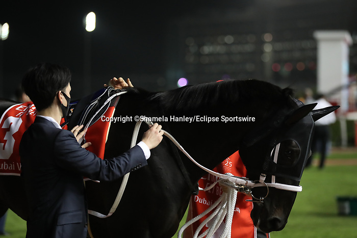 March 27 2021: CHUWA WIZARD (JPN) #3, in the post parade for the Dubai World Cup at Meydan Racecourse, Dubai, UAE. Shamela Hanley/Eclipse Sportswire/CSM