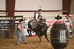 SEBRA - Chatham, VA - 10.24.2014 - Bulls