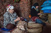 Morocco.  Arab Women Cracking Argan Nuts for Producing Argan Oil.