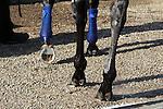 May 26, 2015 American Pharoah hooves and horseshoe. Churchill Downs ©Mary M. Meek/ESW/CSM