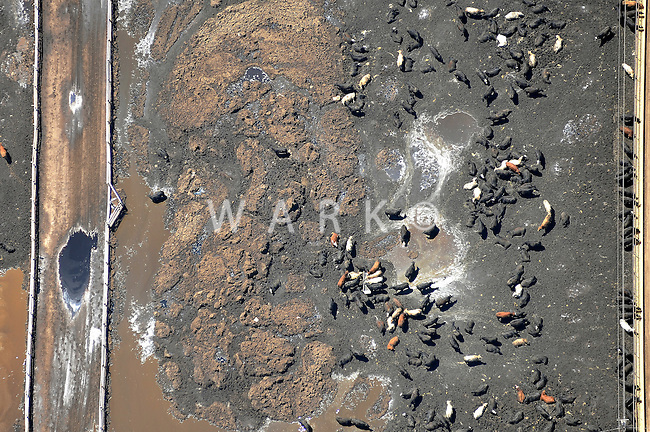 cattle feed lot aerial