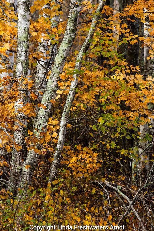 Autumn scenery