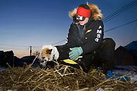 Ed Stielstra wraps his dogs wrists during early morning hours @ Takotna Chkpt 2006 Iditarod Alaska winter