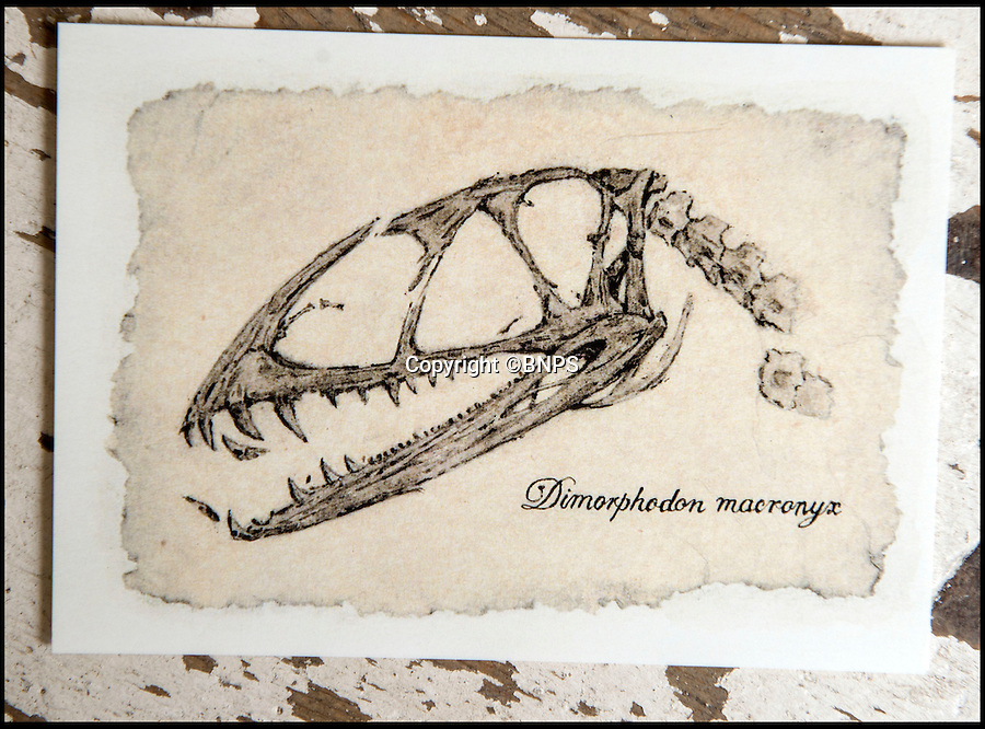 BNPS.co.uk (01202 558833)<br /> Pic: PhilYeomans/BNPS<br /> <br /> Rikey's first drawing was a Pterodactyl skull for David Attenborough.<br /> <br /> Squids in - Dorset artist can't keep up with demand - as her fossil art is done using incredibly scarce 200 million year-old fossilised ink.<br /> <br /> Rikey Austin, 49, extracts ink from a phragmoteuthid fossil, which are somewhere between a squid and a cuttlefish and lived approximately 200 million years ago. <br /> <br /> Her husband, geologist Paddy Howe, finds the fossils while walking along the Jurassic Coast in Lyme Regis, West Dorset, which is a hotbed of fossilised activity.<br /> <br /> Mrs Austin then powders the ink, adds a tiny bit of water and uses it to create captivating images of dinosaurs and other fossilised creatures. <br /> <br /> The phragmoteuthid defended itself by shooting out ink and some of the fossils still have their original pigment in an ink sack inside.<br /> <br /> However, these fossils do not preserve themselves as well as other fossils, so it is extremely rare to find one with its ink sack intact.<br /> <br /> As a result, the mother-of-three has only produced seven drawings since she first experimented with fossilised ink in 2010.