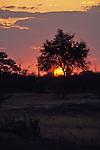 Sunset, Hwange Natl. Park