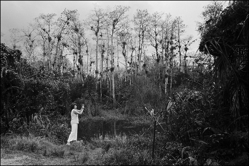 "In the Everglades<br /> From ""In the Wild"" series. Loop road, Everglades, FL, 2008"