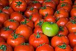 Fresh picked tomatoes, San Luis Obispo, California