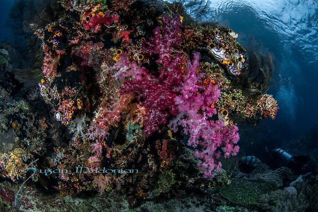Beautiful reef w diver