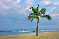 Palm tree and ocean on the Kohala Coast. The Big Island, Hawaii.