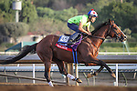 October 27, 2014: Palace works in preparation for the Breeders' Cup Sprint at Santa Anita Park in Arcadia, California on October 27, 2014. Zoe Metz/ESW/CSM