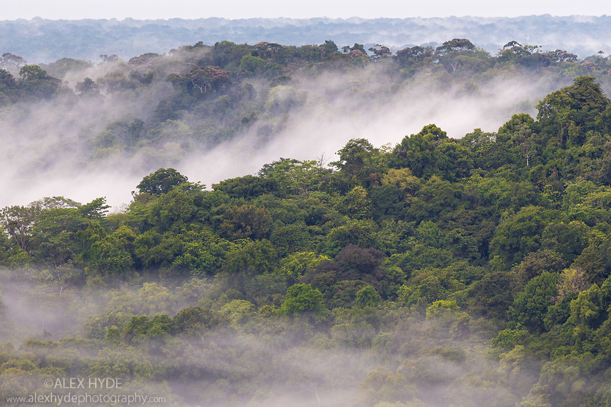 Lowland rainforest with hanging mist at dawn, Osa Peninsula, Costa Rica. May.