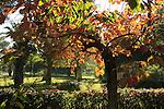 G-231 Mikveh Israel Botanical Garden