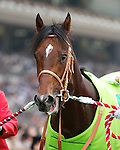 5 June 2011: Real Impact, by Deep Impact, becomes the first 3 year old to win the Yasuda Kinen