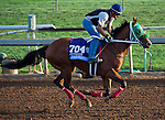 October 27, 2014:  Private Prospect, trained by Michael Campbell, exercises in preparation for the Sentient Jet Breeders' Cup Juvenile at Santa Anita Race Course in Arcadia, California on October 27, 2014. Scott Serio/ESW/CSM
