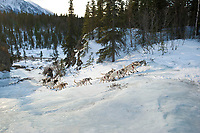 Jim Lanier's team runs up an area called *the glacier* 11 miles after leaving the Rohn checkpoint during Iditarod 2009