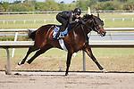 #110Fasig-Tipton Florida Sale,Under Tack Show. Palm Meadows Florida 03-23-2012 Arron Haggart/Eclipse Sportswire.