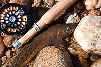Greenback Cutthroat in Rocky Mountain National Park with Abel Reel and Bamboo Rod