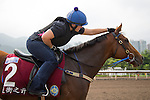 SHA TIN,HONG KONG-APRIL 29: Buffering ,trained by Robert Heathcote,exercises in preparation for the Chairman's Sprint Prize at Sha Tin Racecourse on April 29,2016 in Sha Tin,New Territories,Hong Kong (Photo by Kaz Ishida/Eclipse Sportswire/Getty Images)